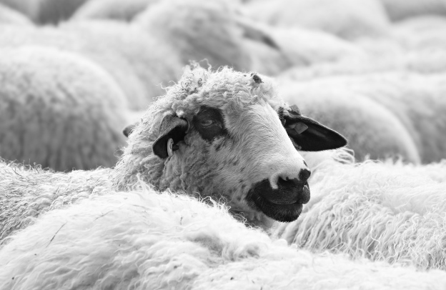 wool was by far the most important export product from Australia