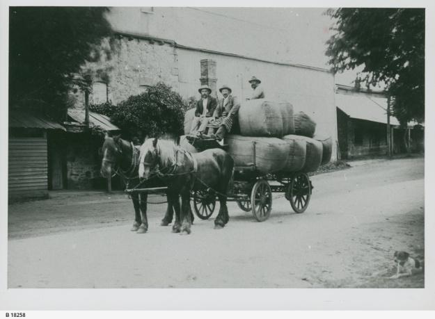 Cartering Wool, Hahndorf, 1901