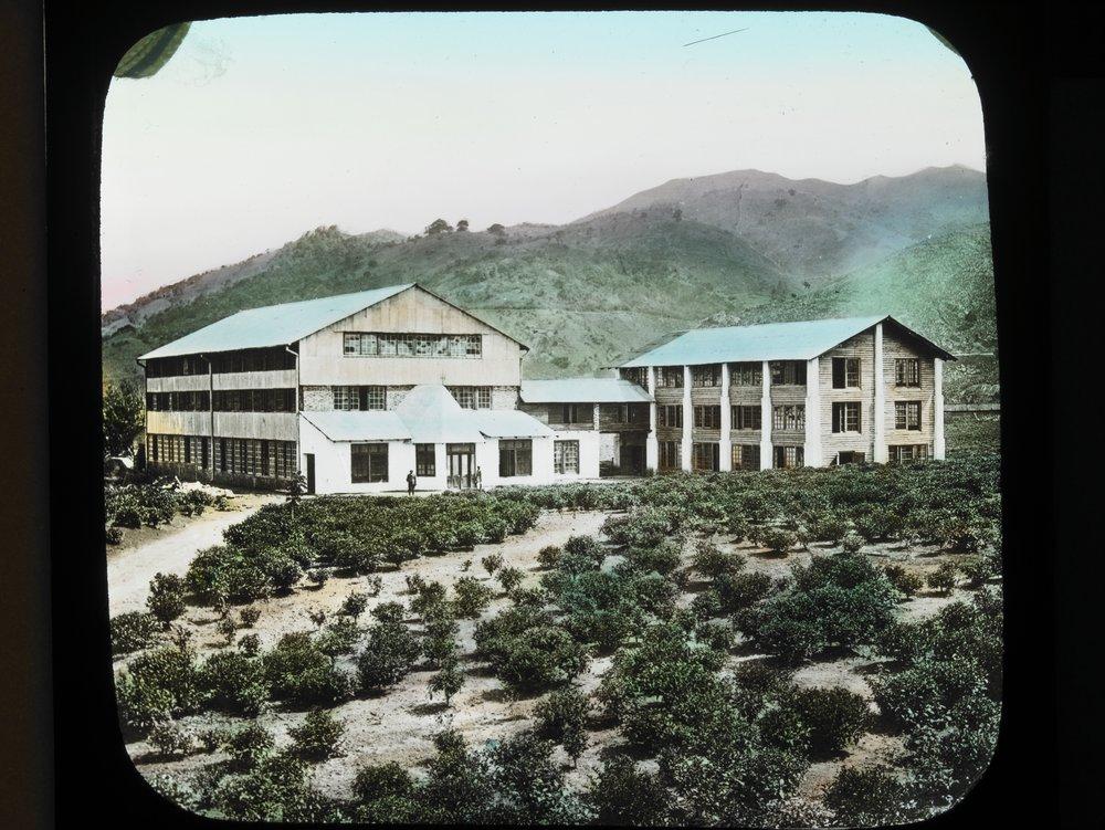 tea plantation, tea factory, ceylon