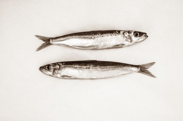 sardines pixabay